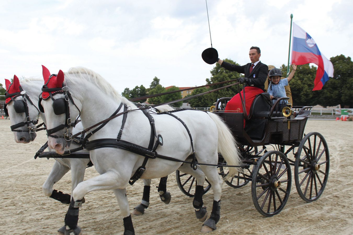 Local Excursions Lipizzaner Horses Stud Farm Lipica Asa Residence Private Villa Kras Slovenia