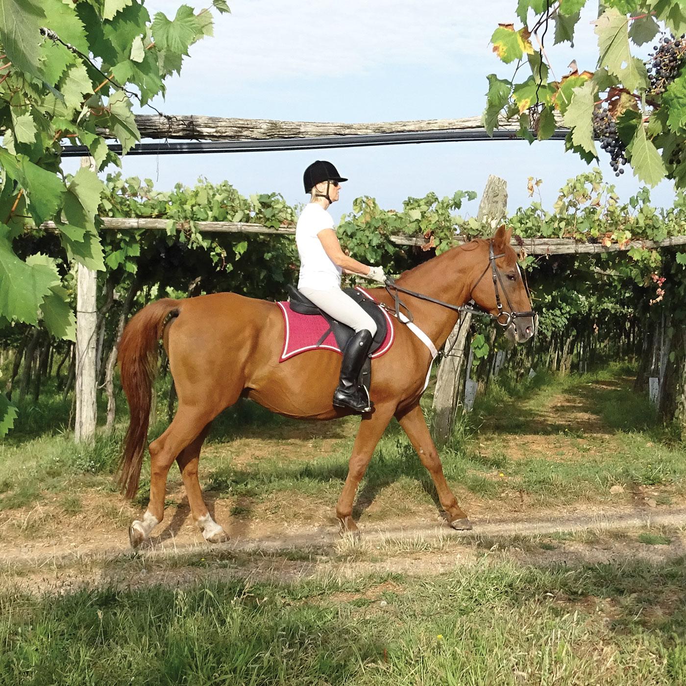 Active Holidays Horse Riding Asa Residence Private Villa Kras Slovenia